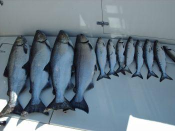 Salmon Deck